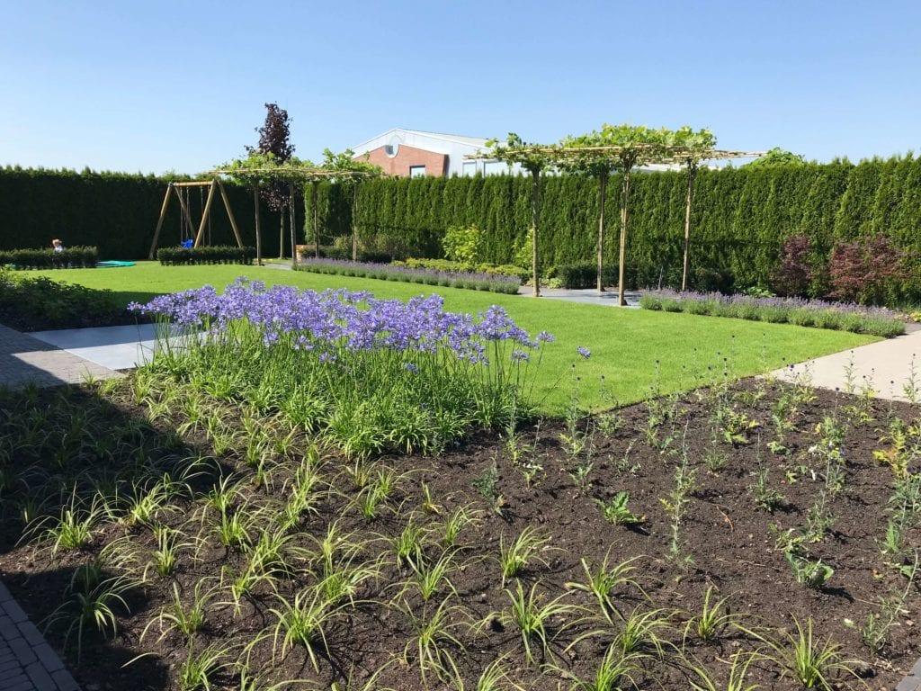Nieuw aangelegde tuin in bloei